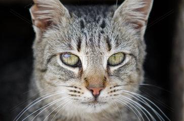 Wilde Katze mit einem kranken Auge