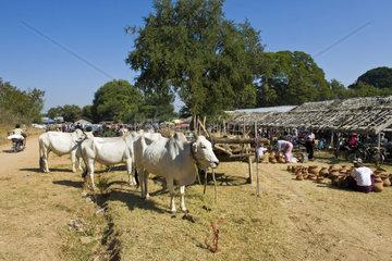 Myanmar  Bagan  local market