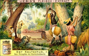 Kautschuksammler am Amazonas  um 1900