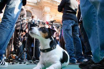 Hund vor Bundestag