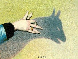 Schattenspiel Ziege 1889