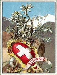 Schweiz  Schweizer Wappen  1900