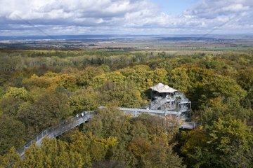 Blick ueber den Nationalpark Hainich  UNESCO Weltnaturerbe  bei Bad Langensalza  Thueringen  Deutschland  Europa