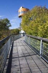 Baumkronenpfad  Nationalpark Hainich  UNESCO Weltnaturerbe  bei Bad Langensalza  Thueringen  Deutschland  Europa