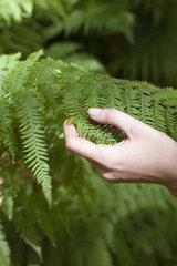 Hand touching fern frond
