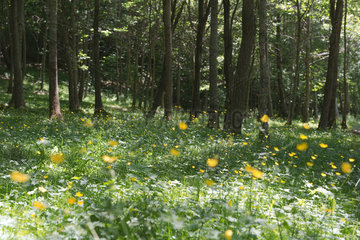 Wildflowers in woods