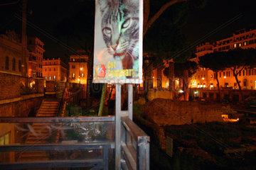 Italy  Rome - Cat Sanctuary in Largo di Torre Argentina.