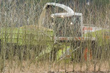 Erntevorfuehrung von Schnellumtriebshoelzern : Der Landmaschinenhersteller CLAAS erntet mit einem speziellen Holzvorsatz fuer Selbstfahrende Feldhaecklser auf einer Versuchsflaeche einen 3-jaehrige  in Doppelreihen gepflanzten Pappelbestand