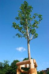 Junge Strassenbaum