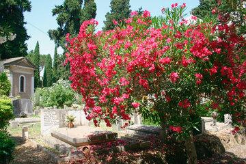 Rom Cimitero Verano Friedhof