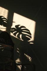 Schatten ein Fensterblatt