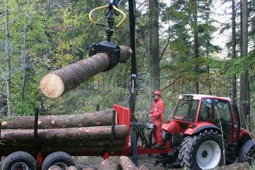 Abtransport von Holzstaemmen
