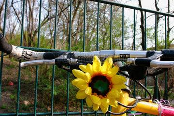 Sonnenblume und Fahrrad