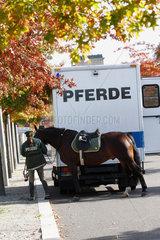 Polizei und Pferde