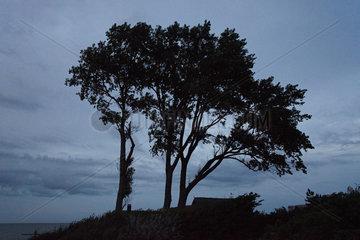 Ahrenshoop - Trees Silhouette