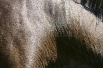 Pferdefell