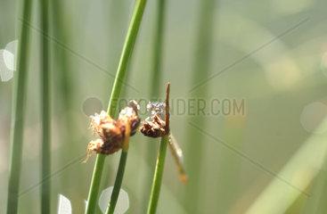 Libelle im Gegenlicht