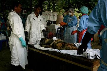 Gerichtsmediziner aus aller Welt entnehmen DNA Proben der Opfer der Tsunami Katastrophe um die Leichen identifizieren zu koennen.