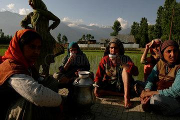 Reisbauern machen eine Pause bei der Arbeit.