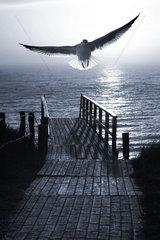 Sonnenuntergang am Meer mit Moewe  Montage  Sylt