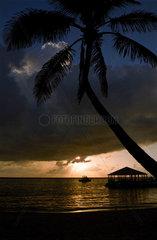 Palme und Sonnenuntergang am Colliers Bay