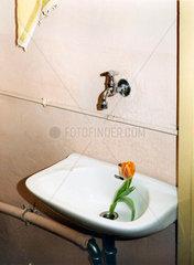 Tulpe in einem Waschbecken