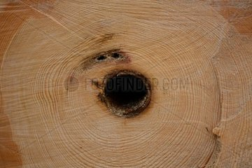 frisch geschnittener Baum