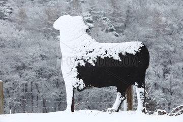Holz Schaf in Nordhessen an der B252  B 252