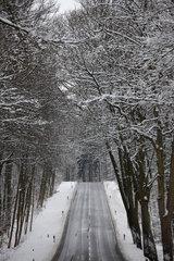 Allee Landstrasse in Nordhessen an der B252  B 252