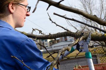 junge Frau beim Winterschnitt an einem Apfelbaum