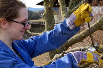 junge Frau beim Winterschnitt eines Obstbaumes