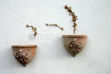 Reste eine Kletterpflanze auf eine Fassade