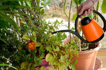 Frau giesst Pflanzen im Wintergarten