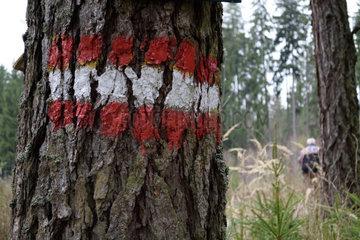 Wanderwegmarkierungen auf einem alten Baum