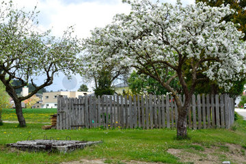 Apfelbaume vor altem Holzzaun und alten Brunnen