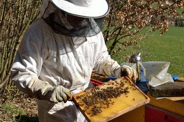 Imker kontrolliert Honigwabe