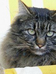 Katze close-up.