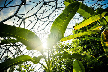 Tropical plants growing in biodome