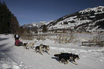 Schlittenhunderennen in Lenk im Berner Oberland