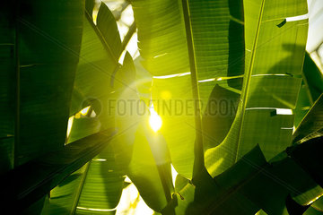 Sunlight shining through palm leaves