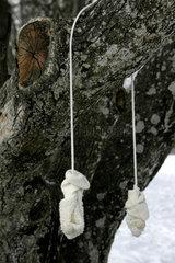 Kinderhandschuhe haengen an Baum im Winter.