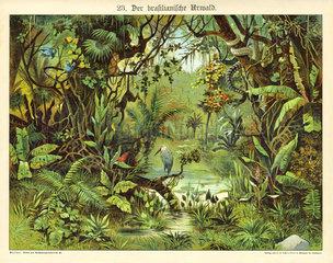 Der brasilianische Urwald  Lehrtafel  1885