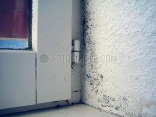 Schimmel an Wohnungswand innen beim Fenster.