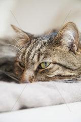 Katze auf dem Sofa im Sonnenlicht  Kater  Muede  Ausruhen