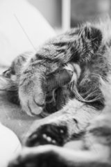 Katze auf dem Sofa im Sonnenlicht  Kater  Muede  Ausruhen  schwarz-weiss