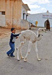 Kleiner Junge und Kamel Jungtier