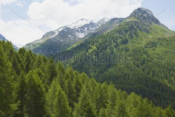 Piz Salachina  Maloja  Engadin  Schweiz  Alpen  Auszeit  Berg  Bergwandern  Gebirge  Idylle  Urlaub  Wald  Wolke  Tanne  Umwelt  Nachahltigkeit  Natur  Sport  Luft  Hoch  Sauerstoff  Pflanze  Sonne