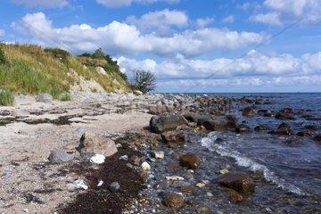 Ostseekueste bei Staberhuk  Insel Fehmarn  Kreis Ostholstein  Schleswig-Holstein  Deutschland  Europa