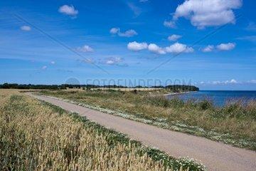 Weg entlang der Ostseekueste bei Staberhuk  Insel Fehmarn  Kreis Ostholstein  Schleswig-Holstein  Deutschland  Europa