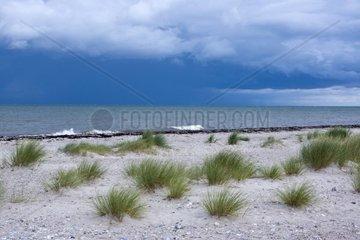 Naturschutzgebiet Gruener Brink  Insel Fehmarn  Ostsee  Kreis Ostholstein  Schleswig-Holstein  Deutschland  Europa